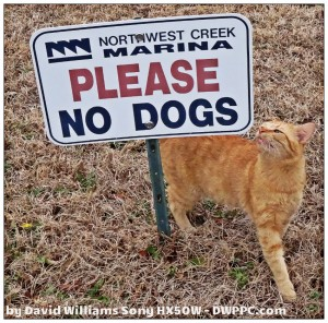 Cat By Dog Sign